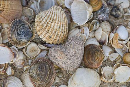 sand heart and shells on the beach