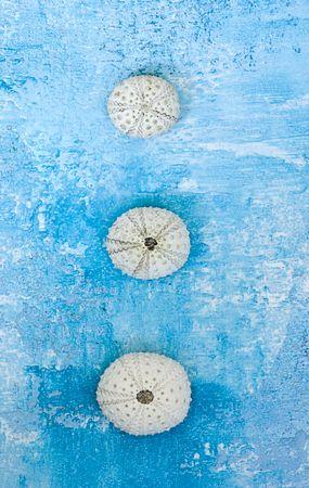 pilluelo: tres proyectiles de erizo de mar en una fila de fondo azul