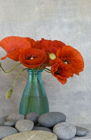 red poppy flower in a vase photo