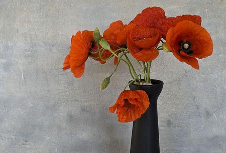 red poppy flower in a vase photo