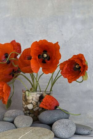 red poppy flower and pebble photo