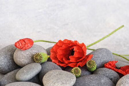 red poppy flower on pebble Stock Photo - 6534692