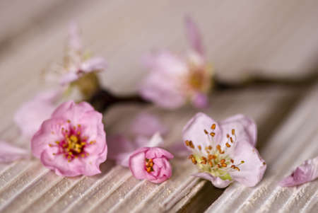 pink peach blossom on wooden plank Stock Photo - 6550596