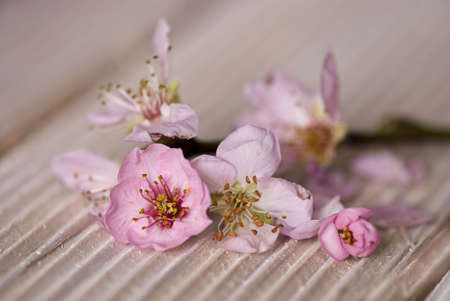 pink peach blossom on wooden plank Stock Photo - 6550599