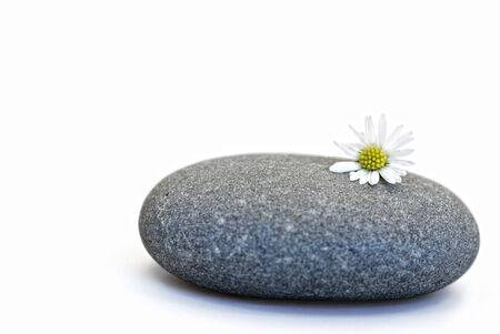 gray pebble with daisy flower Stock Photo - 6550592