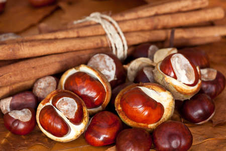 autumn still life with chestnuts and cinnamon Stock Photo - 9832276