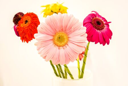 summer bright gerber with green legs stay in glass vase on the reception table in office. gerber daisies isolated on white background. colorful flowers as mood lifting method