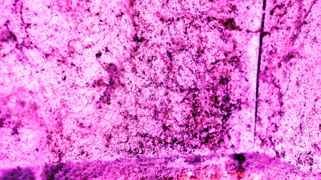 lilian pink wall with big spider web, black mold and clear water drops on it. Dangerous toxic fungus mold on the ceiling in the room. Abstract background with mold and wet spider web on wall in room