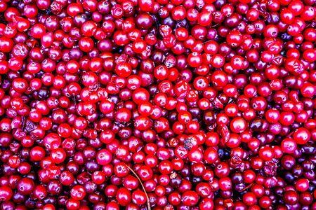 natural sweet burgundy red wallpaper of berrie cranberrie close-up. cranberry juice. cranberry whole frame. the set of vitamins in cranberries. the berry grows in the swamp. fresh cranberries Stock Photo