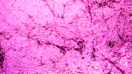 violet pink lilian wall with spider web, black mold and clear water drops on it. Dangerous toxic fungus mold on the ceiling in the room. Abstract background with mold and wet spider web on wall in room Stock Photo