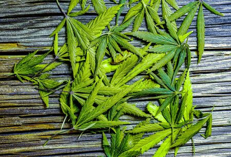 a couple of fresh cannabis leaves lay on wooden desk