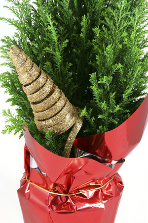festive green red and gold christmas decoration potted christmas tree isolated on white - Potted Christmas Tree