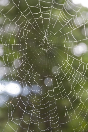 Rain drops decorating a spider web. Isolated on a blurry background.