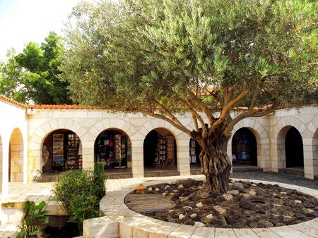 Church courtyard with olive tree, Tabgha, Israel,