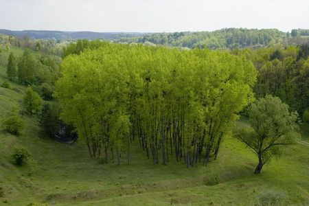weald: Beautiful green field Stock Photo
