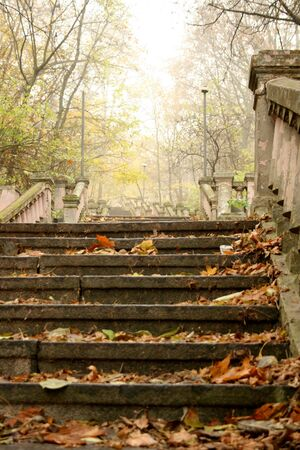 banisters: Foggy stairs with pink banisters in autumn, covered by yellow leaves