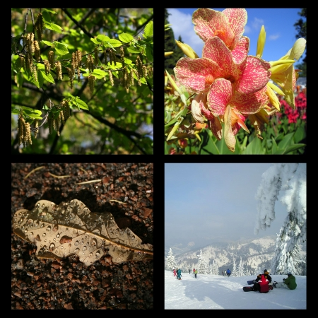 Collage of four pictures representing each season: spring, summer, autumn and winter. photo