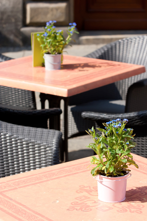 Street cafe. Flowerpots with blue forget-me-not on the tables.