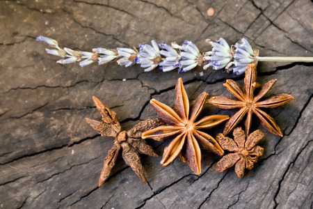 Star anise and lavander branch Stock Photo