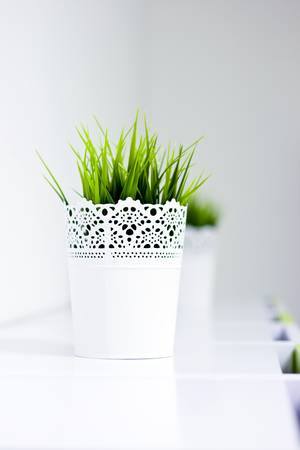 Green grass in the white pot on a white background.