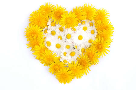 yellow daisy: heart formed with spring blossoms