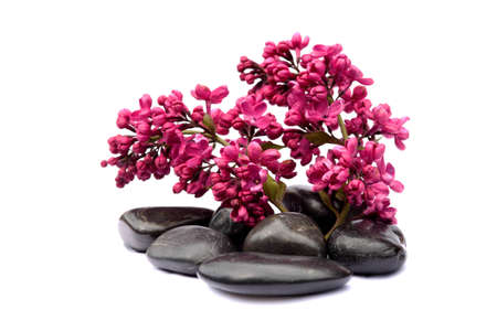 lilac and black pebbles on white background