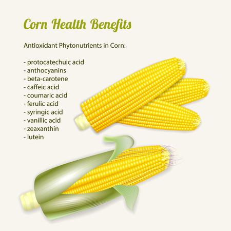 corn stalk: Ripe corn on the cob. Vector illustration of stylized fresh ripe corn cobs. Illustration