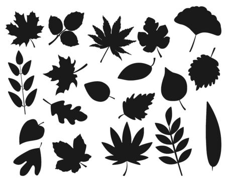 Collection of leaf silhouettes isolated on white background