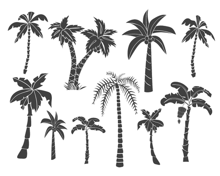Vector set of black silhouettes of tropical leaves, palm trees, foliage. Hand drawn design elements of a tropical nature. Stylized images and simple shapes for logos and natural decor. Vettoriali