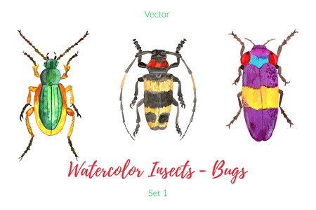 entomology: Set of colorful, hand painted watercolor insects, bugs, beetles isolated on white background. Bright insects, graphic design elements.