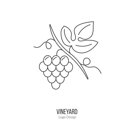 vinification: Grapes with leaf. Illustration