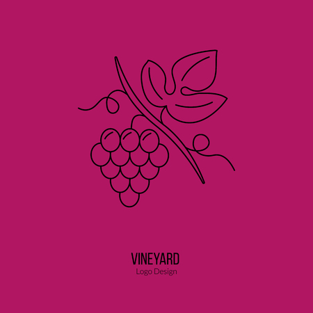 viticulture: Grapes with leaf. Illustration