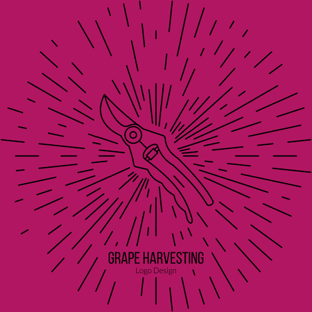 vinification: Grape picking trimming snips with star burst. Illustration