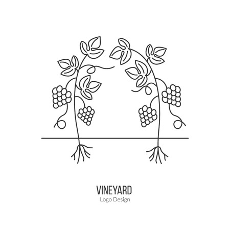 vinification: Growing grapes. Illustration
