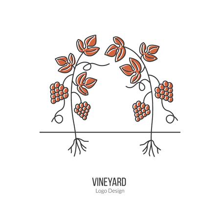 vinification: Growing grapes. Illustration