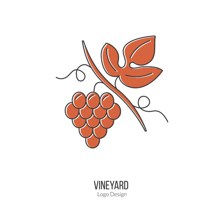 winemaking: Grapes with leaf. Illustration