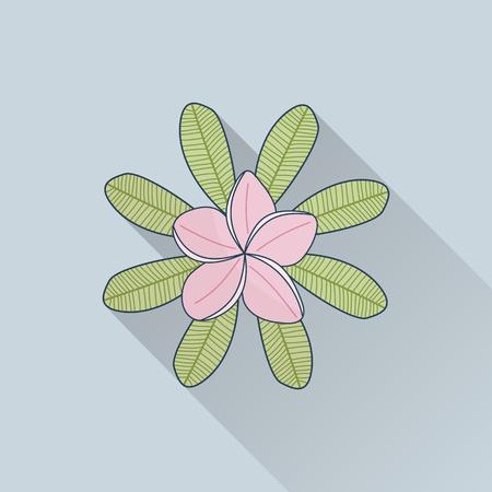 Hand drawn frangipani, plumeria. Illustration