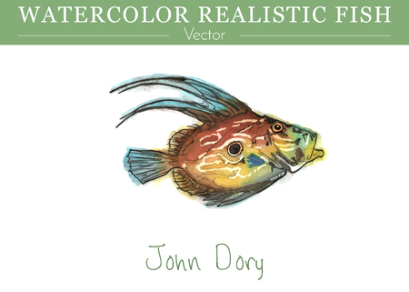 Hand painted watercolor fish isolated on white background. John Dory, St Pierre or Peters Fish. Vettoriali