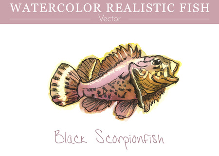 Hand painted watercolor fish isolated on white background. Black scorpionfish, Scorpaena porcus, venomous scorpionfish. Scorpaenidae family fish. Colorful edible, saltwater fish. Vector illustration.