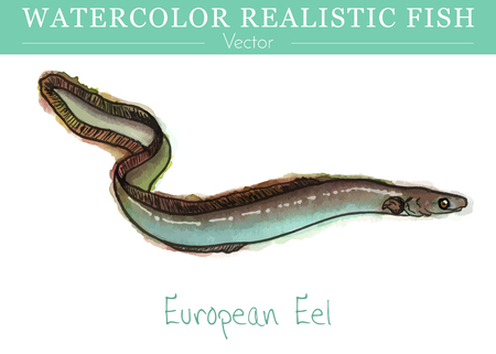 Hand painted watercolor fish isolated on white background. European eel, a snake-like, catadromous fish. Anguillidae family fish. Colorful edible, saltwater fish. Vector illustration.