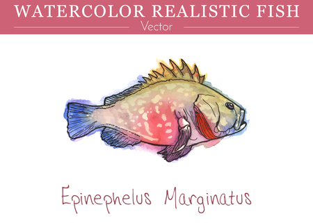 Hand painted watercolor fish isolated on white background. Epinephelus marginatus, dusky grouper, merou. Serranidae family fish. Colorful edible, saltwater fish. Vector illustration. Vettoriali