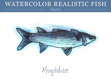 Hand bemalte Aquarell Fisch isoliert auf weißem Hintergrund. Mugilidae, graue Meeräsche. Mugilidae Familie Fisch Bunte Speise-, Salzwasser- und Süßwasserfische. Vektor-Illustration. Standard-Bild - 75848317