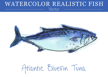 Hand painted watercolor fish isolated on white background. Atlantic Bluefin Tuna, Thunnus thynnus. Scombridae family fish. Colorful edible, salt water water fish. Vector illustration.