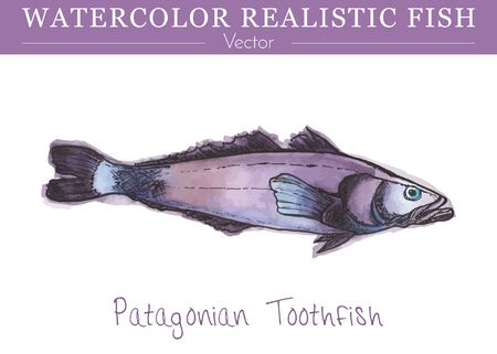 Hand painted watercolor fish isolated on white background. Patagonian toothfish, dissostichus eleginoides, cod icefish species, nototheniidae family. Colorful edible, salt water fish. Vector.