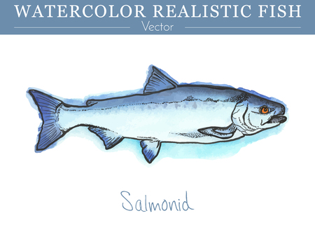 Hand painted watercolor fish isolated on white background. Salmon, species of ray-finned fish. Salmonidae family fish. Colorful edible, salt water and fresh water fish. Vector illustration.