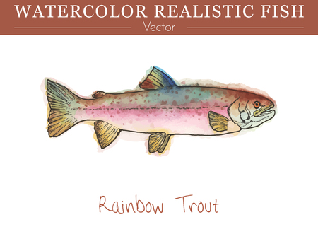 Hand painted watercolor fish isolated on white background. Rainbow trout, Oncorhynchus mykiss, salmonid species. Salmonidae family fish. Colorful edible, salt and fresh water fish. Vector illustration Ilustração