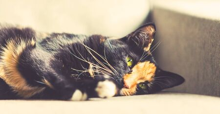 Close up of the face of a black and ginger cat on a couch