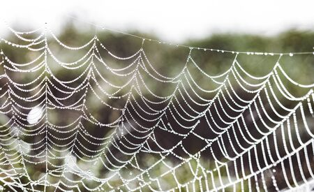 Early morning dew water droplets clinging to a spiders web in rural South Africa Фото со стока