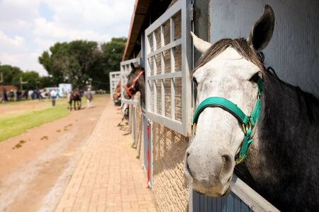 Horses heads poking out of stable doors on a country estate 免版税图像