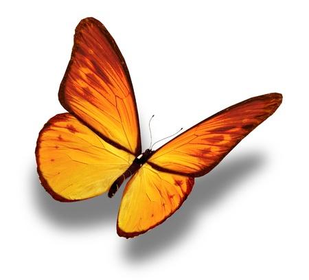 butterflies flying: Amarillo mariposa, aisladas sobre fondo blanco Foto de archivo